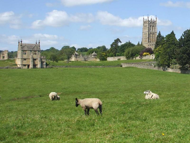 Chipping Campden sheep